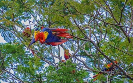 belize birds