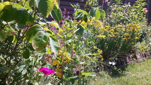 tuin met bloemen
