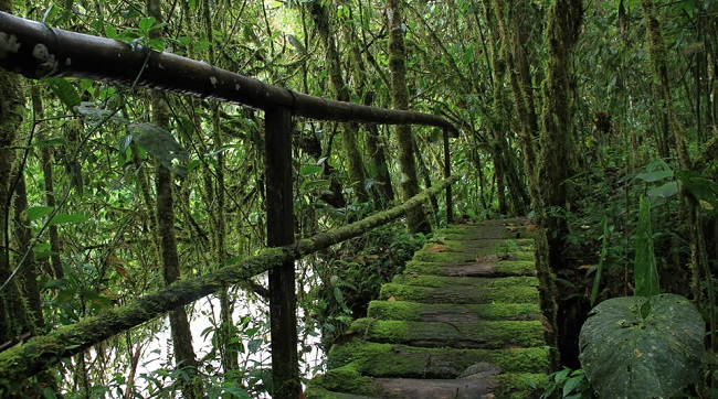 Best Routes to Practice Ecological Trekking in Colombia