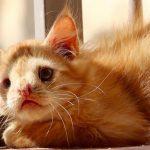 """Romeo, el gato que fue abandonado por ser """"demasiado feo"""" ya tiene hogar"""