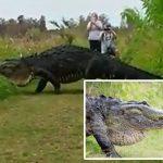 El cocodrilo gigante que fue visto en Florida es real y no es una criatura prehistórica