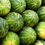 A exportar melones de Puerto Rico