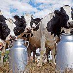 Ganaderos piden establecer procedencia exclusiva para productos con leche Grado A