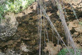 A turistear en la cueva María de la Cruz: Loíza inaugura su primera empresa municipal