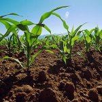 Departamento de Agricultura urge sobre la protección de la producción agrícola ante la temporada de huracanes