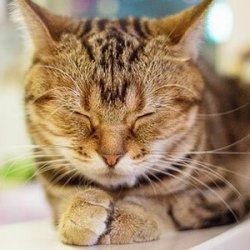 25 fotos de gatos sendo gatos no Japão
