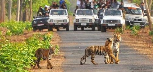 Tadoba National Park - Chandrapur District of Maharashtra