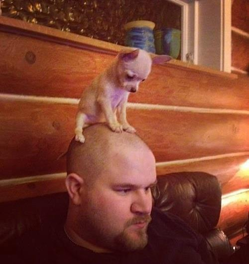 And this is your brain on dogs -- or rather, this is a dog on your brain. Okay, on the outside.