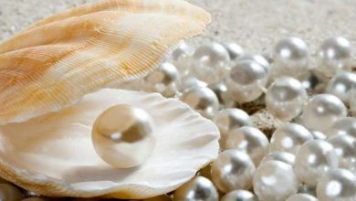 difference between natural agricultural artificial pearls 6 differences help you distinguish