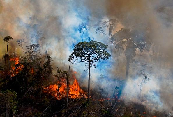 La foresta amazzonica negli ultimi anni starebbe producendo più anidride carbonica di quanta riesce a smaltirne. I motivi.