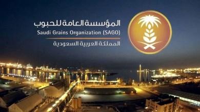 Photo of «مؤسسة الحبوب» تطرح مناقصة لاستيراد 900 ألف طن شعير