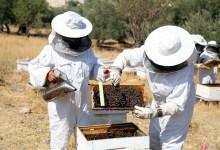 """صورة """"البيئة"""": فتح باب التسجيل للبرنامج التدريبي المتكامل لتربية النحل"""