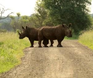 Push-me-pull-me Rhino