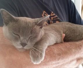 Cute cat video: Loki carries his bed away