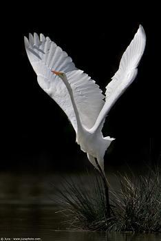 Qi Gong Białego Żurawia