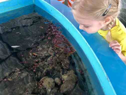 ką veikti su vaikais krabyje