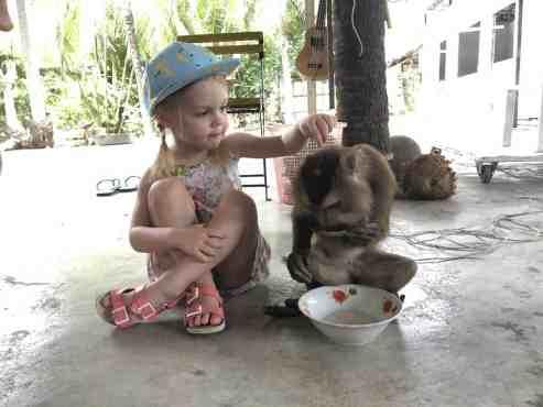Bezdžionių mokykla