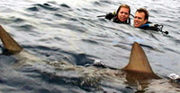 Sharks are everywhere in 'Open Water'