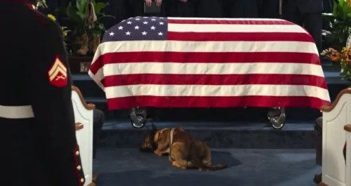 Max the military working dog at his handler's funeral in 'Max'