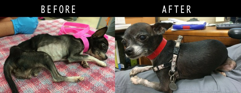 Mia - Criminal Case Animal Neglect