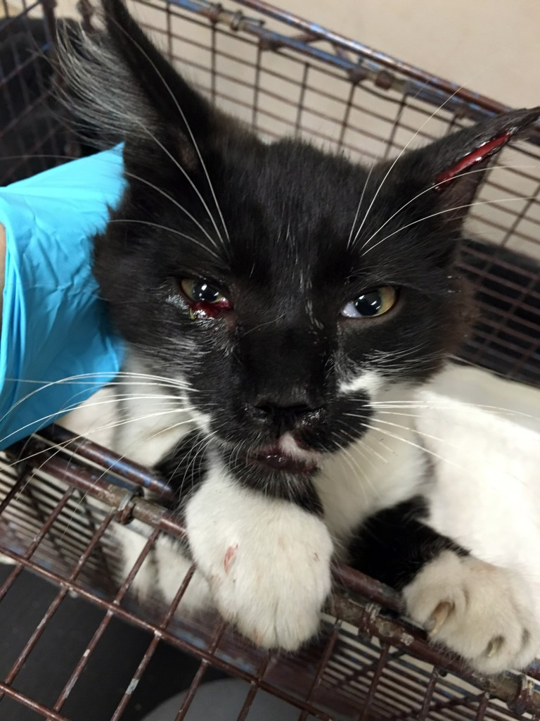 Bobby - Trauma from Head to Tail — Tails of a Shelter Vet