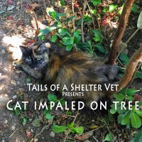 Cat Impaled on Tree