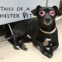 Dog Strangles Animal Shelter Veterinarian Vet Swollen Eyes