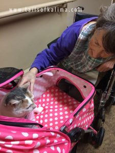 Kali-Ma the Cat doing Cat Therapy at Medilodge Nursing Home