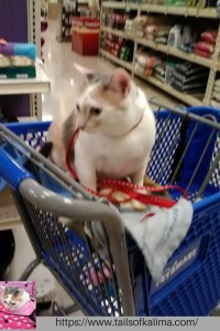 Kali-Ma the Cat First Shopping Trip January 2011