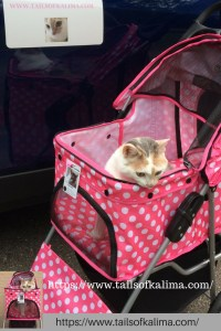 Cat Car Travel Tips