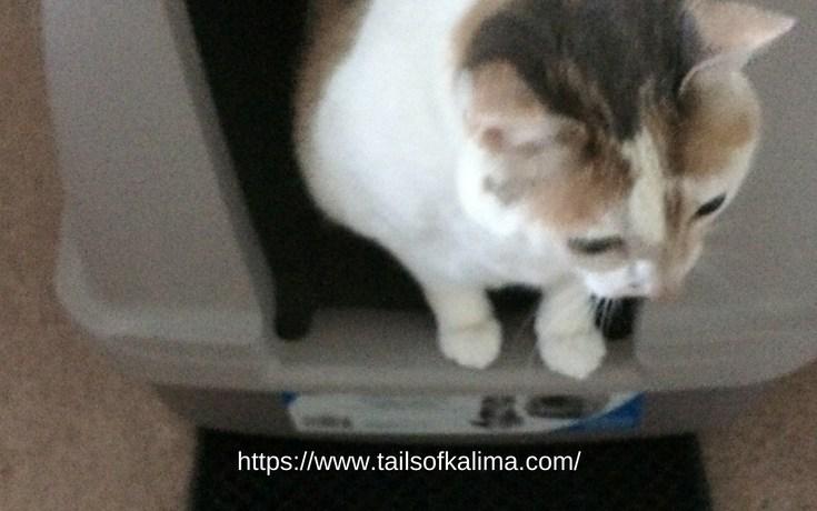 6 Tips For Choosing Cat Litter
