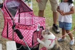 Kali-Ma At Park Meeting Children