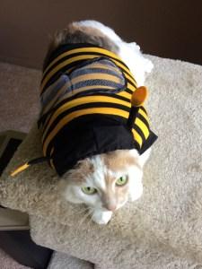 Cat Halloween Costumes