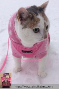 Saturday With My Snow-Loving Cat