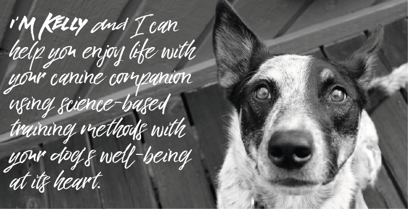 I'm Kelly and I can help you enjoy life with your canine companion using science based training methods with your dog's well-being at its heart.