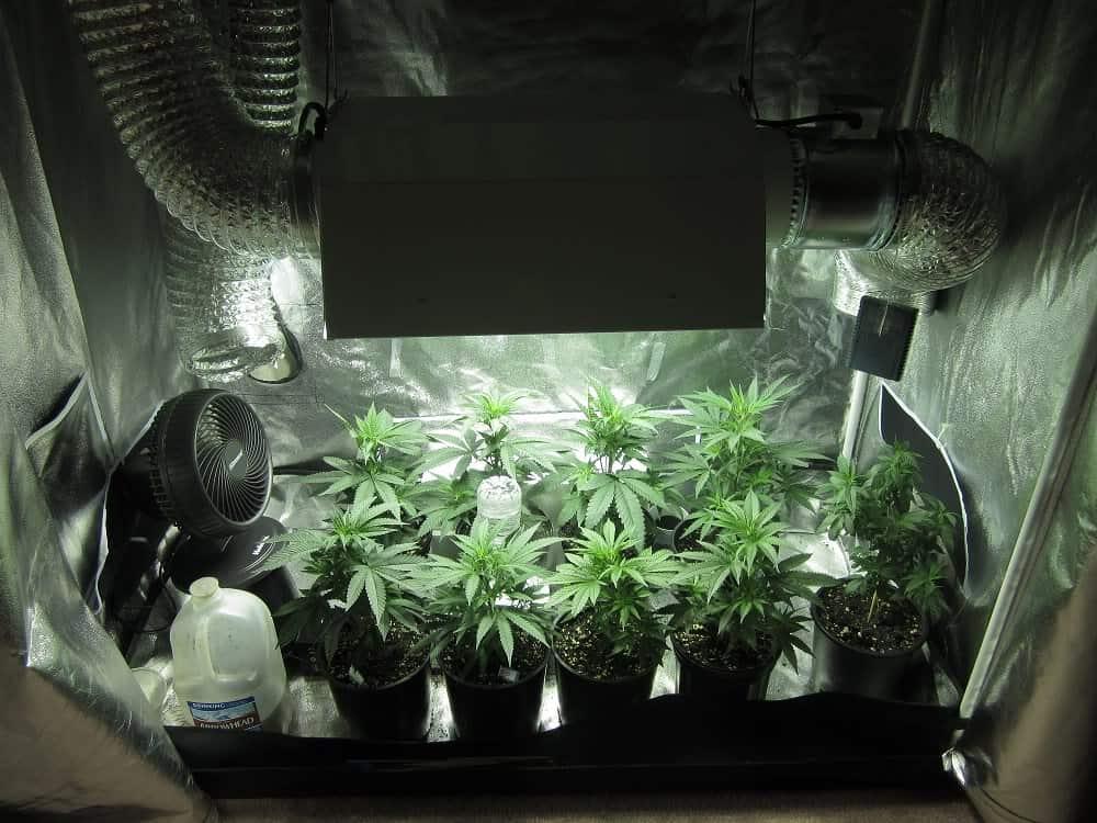 大麻室内栽培のにおいを最小限