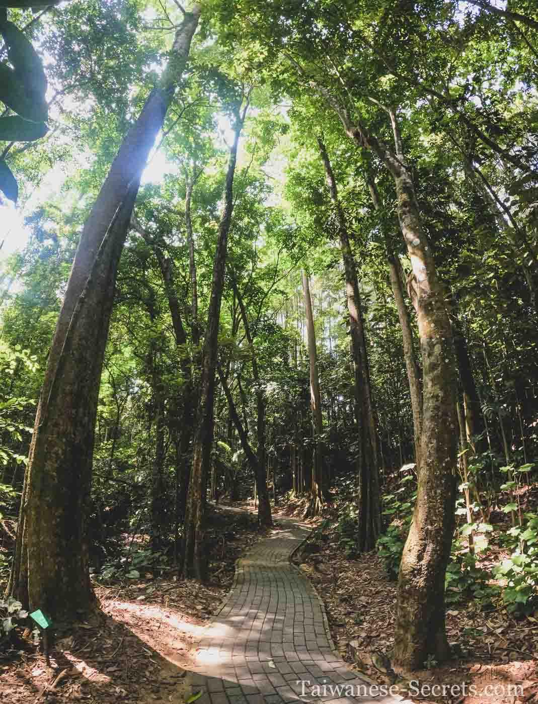 Hiking in Chiayi Park