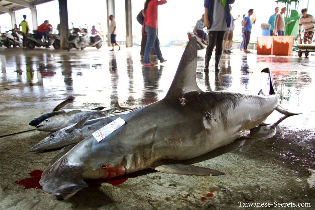 hammerhead shark taiwan