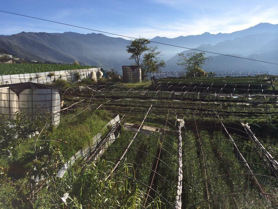 Taiwan tea plantation nantou