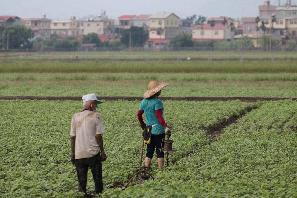 taiwanese farmers