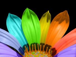 rainbow-flower-1528089-639x479