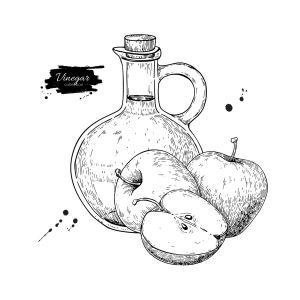 りんごとりんご酢瓶のペン画