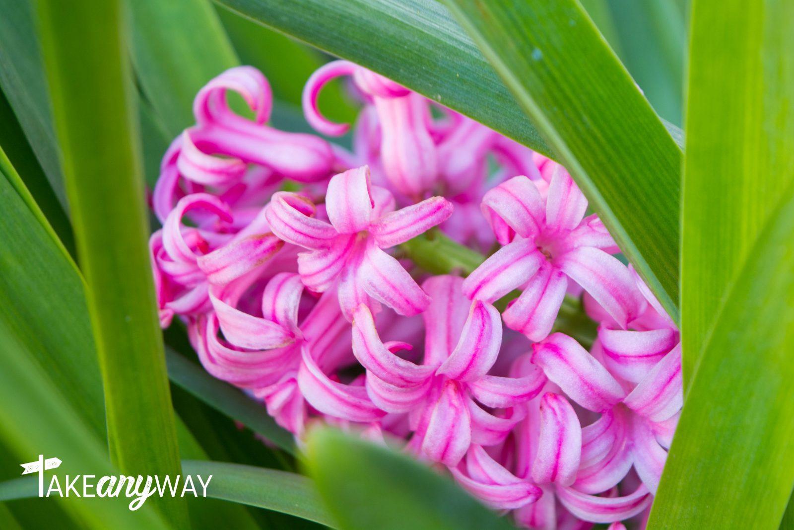 colori-di-primavera