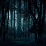 迷い人の森