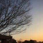 記念樹と空
