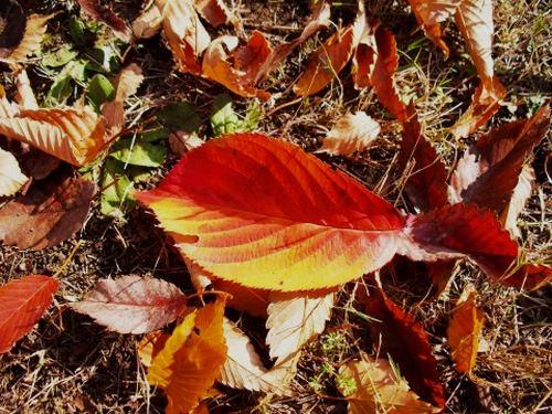 枯葉色のコート