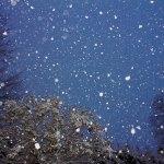 冬の星座に…