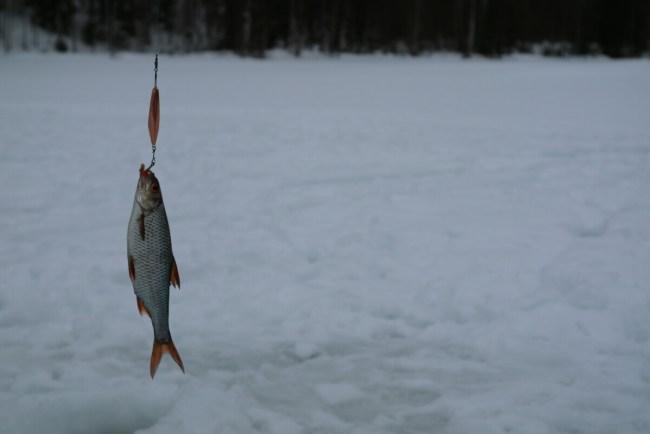 Vis gevangen bij ijsvissen