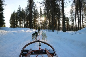 Huskytocht Granö Beckasin
