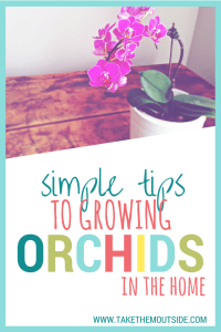 a pink orchid in a white pot sitting on a wooden table, text reads simple tips to growing orchids in the home